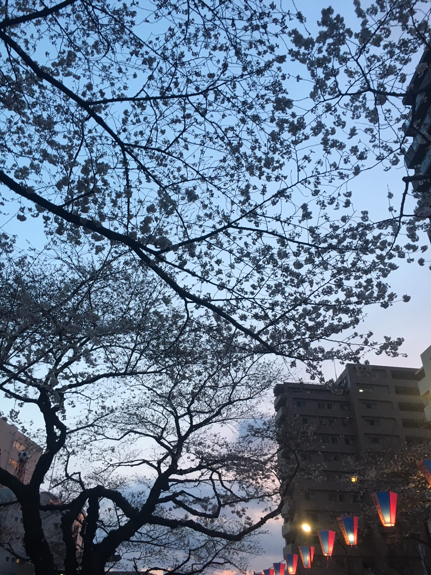 Sakura - Where to enjoy picnic under cherry blossoms in Central Tokyo